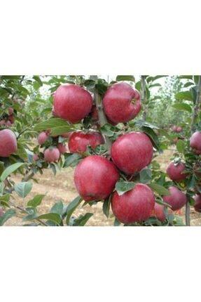taşkar peyzaj Starking Elma Fidanı ( Aşılı - 2 Yaş ) - Açık Kök - 100-120 Cm 0