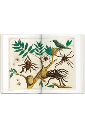 Taschen Albertus Seba. Cabinet Of Natural Curiosities Hardcover - Kitap 2