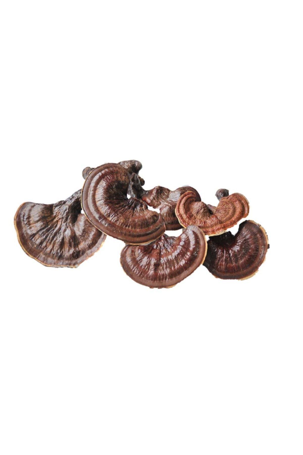 Reishi ( Ganoderma Lucidum ) Mantarı Kuru - Natural 100gr