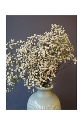 Kuru Çiçek Deposu Kuru Çiçek 1.kalite Şoklanmış Dökülmeyen Natural Beyaz Cipso Demeti 1