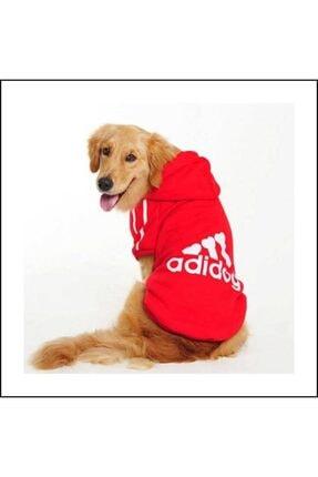 Kemique Gri Kapşonlu Adidog Sweatshirt Büyük Köpekler Için 2