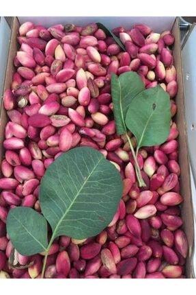 Şanlıurfa Organik Ev Ürünleri Antep Fıstığı Damla Kuru Kabuklu(1kg) 3