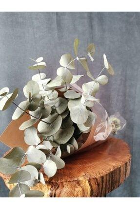 Decolass Kuru Çiçek Şoklanmış Okaliptus Demeti Yeşil (50 cm) 1