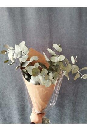 Decolass Kuru Çiçek Şoklanmış Okaliptus Demeti Yeşil (50 cm) 2