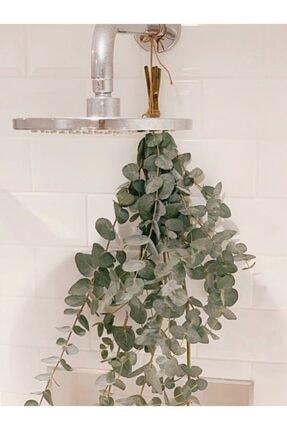 Decolass Kuru Çiçek Şoklanmış Okaliptus Demeti Yeşil (50 cm) 3