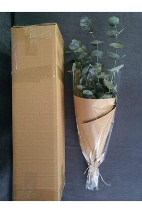 Decolass Kuru Çiçek Şoklanmış Okaliptus Demeti Yeşil (50 cm) 4
