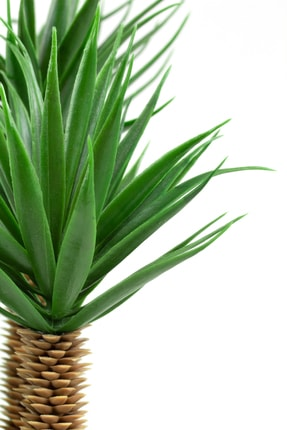 çiçekmisin Siyah Saksıda Üç Dal Yapay Kaktüs Aloevera 3