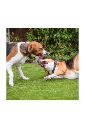 İREM Yavru Köpekler Için Kemirme Ipi Oyuncaklı 0