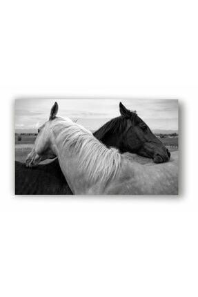 kanvasnes Siyah Beyaz At Temalı - Her Mekana Uygun Dekoratif Kanvas Tablo 1