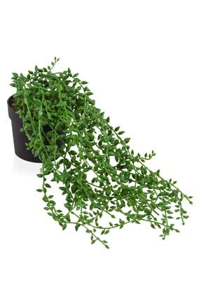 çiçekmisin Mini Siyah Plastik Saksıda Sarkan Boncuk Yeşillik 2
