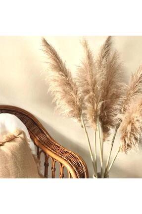 ÇiçekAntalya Çiçek Antalya Natural Pampas Uzun Kandilli 140- 150 Cm 1 Adet 1