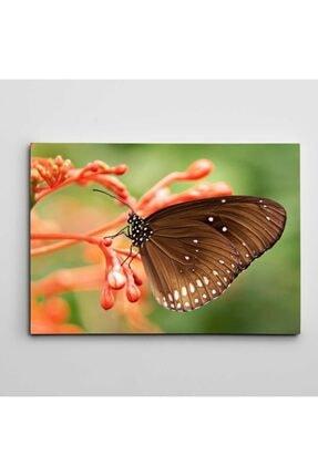 Dekolata Çiçek Ve Kelebek Kanvas Tablo 40 X 60 cm 0
