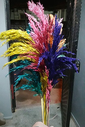 Alyones Dekoratif Şoklanmış 15'li Pampas Otu Karışık Renk 100 Cm 0