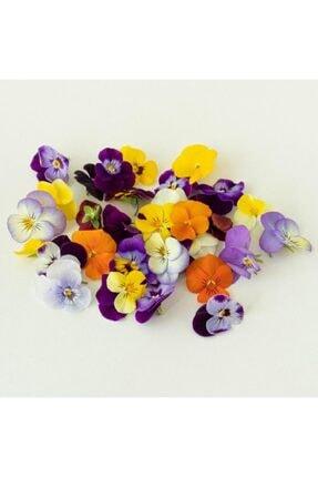 Mimi Çiftliği Yenilebilir Çiçek Menekşe (Pakette 30 Ad) 3
