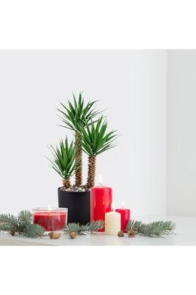 çiçekmisin Siyah Saksıda Üç Dal Yapay Kaktüs Aloevera 1
