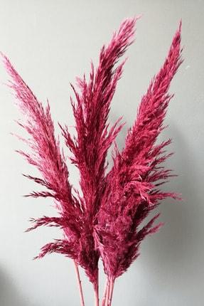 Kuru Çiçek Deposu Gerçek Kuru Çiçek Pembe Dökülmeyen Şoklanmış Pampas (7 Adet 100 cm) 1