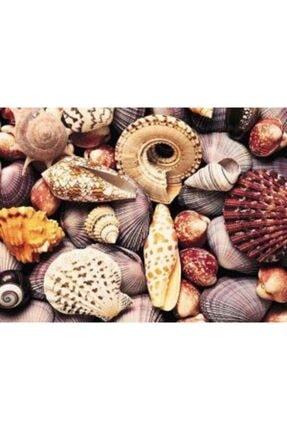 Deniz Akvaryumu Malzemeleri