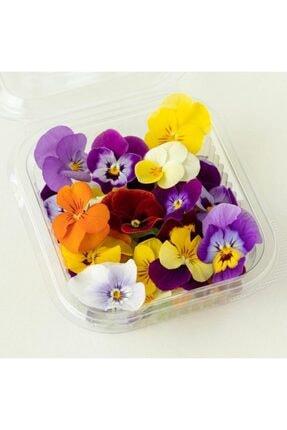 Mimi Çiftliği Yenilebilir Çiçek Menekşe (Pakette 30 Ad) 1