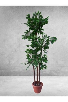 purebunny Yapay Bol Yapraklı Gerçek Ağaç Gövdeli Benjamin 0