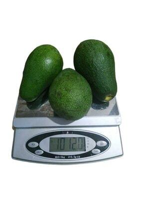 Alanya Özlem Avokado Dalından Taze Net En Az 1 Kg (3 -6 Adet Arası) 2