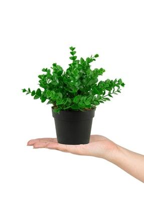 çiçekmisin Siyah Mini Plastik Saksıda Yapay Demet 0