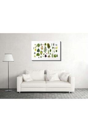 Krafmat Yaprak Setleri Kanvas Tablo 70x105 0