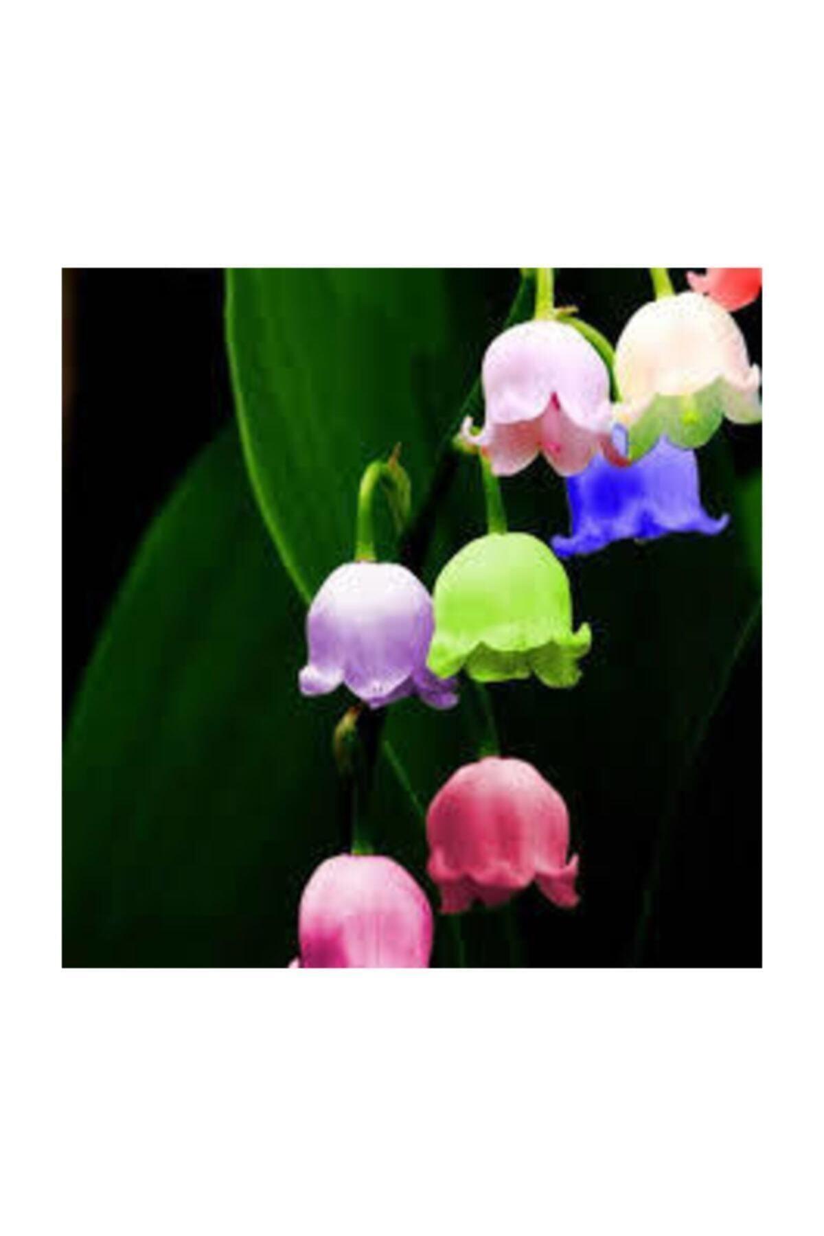 Nadir Çan Orkide Tohumu 5 Adet Tohum Çiçek Tohumu