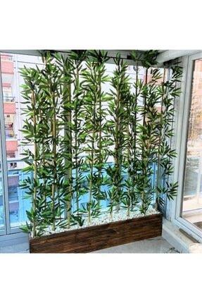 Bambu 2 Metre Boyunda Ahşap Saksıda Ağaç 0