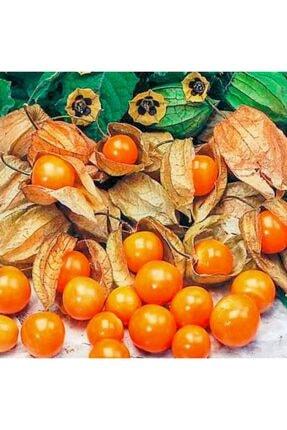 mutbirlik Şifalı Altın Çilek Yer Kirazı Meyvesi Fidesi-5 Adet 0