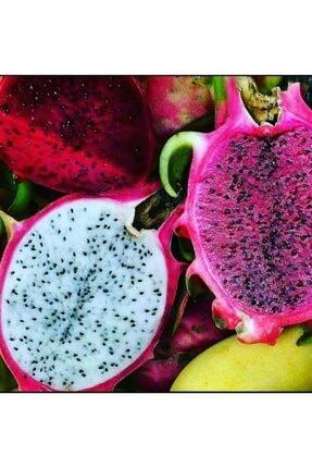 TROPİKAL MEYVENİZ Beyaz ve Kırmızı Karışık Ejder Meyvesi 0