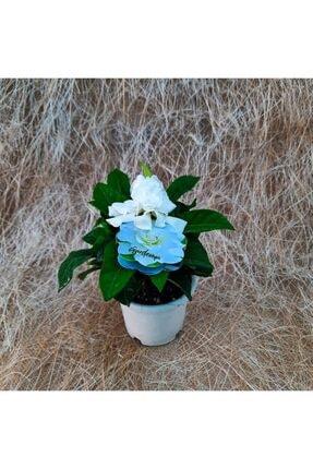 mutbirlik Saksıda Yoğun (kokulu) Gardenya Çiçeği 1
