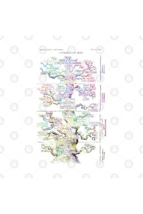 TatFast Haeckel's Evolution Of Man Kupa 2