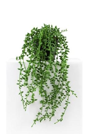 çiçekmisin Mini Siyah Plastik Saksıda Sarkan Boncuk Yeşillik 1