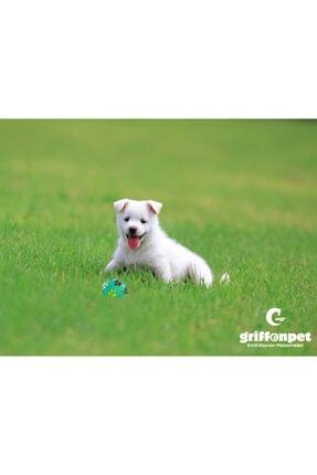Griffonpet Köpek Top Oyuncak Çapı 7.5 Cm 4
