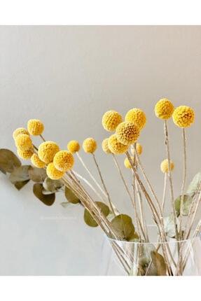 Hestia Home Kuru Bitki Graspedia 1