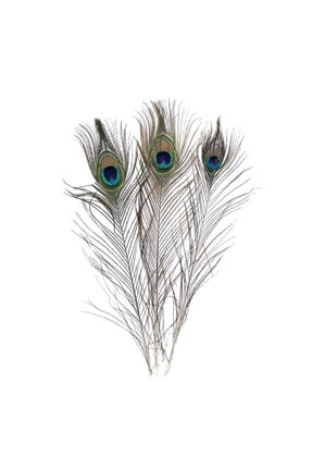 Eminonutoptanci Gerçek Tavus Kuşu Tüyü 20-30 cm 10 Adet 0