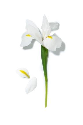 Lancome La Vie Est Belle Eau De Parfum 30 ml 3605532612690 3