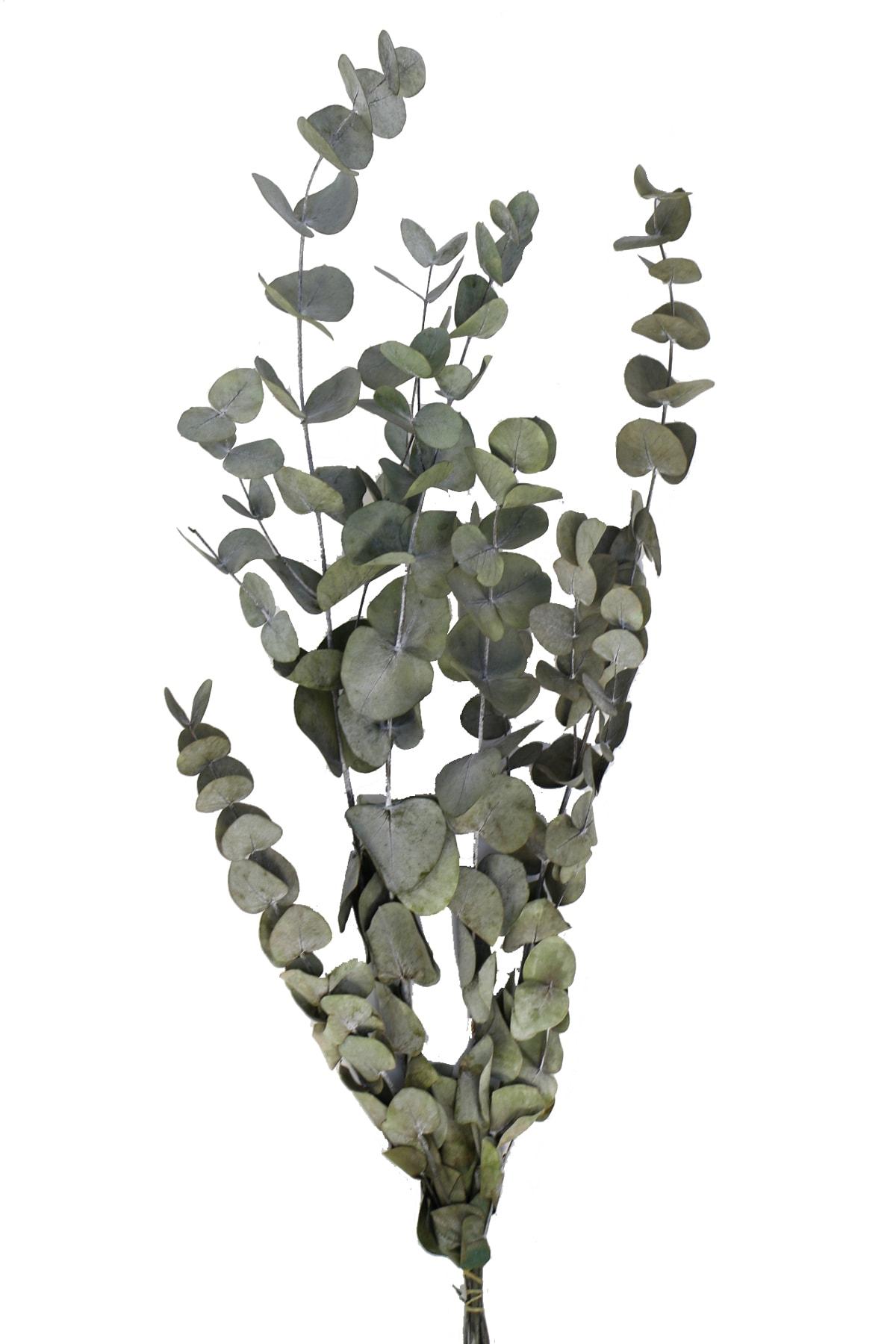 Şoklanmis Okaliptus Demeti Yeşil(Büyük Demet)