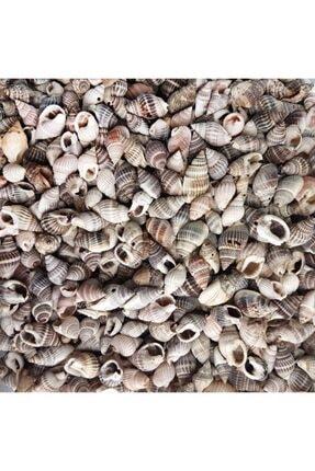Aker Hediyelik Minik Doğal Deniz Kabuğu 100gr Karışık Ufak Gerçek Deniz Kabukları – Şişe Içine Göre 0