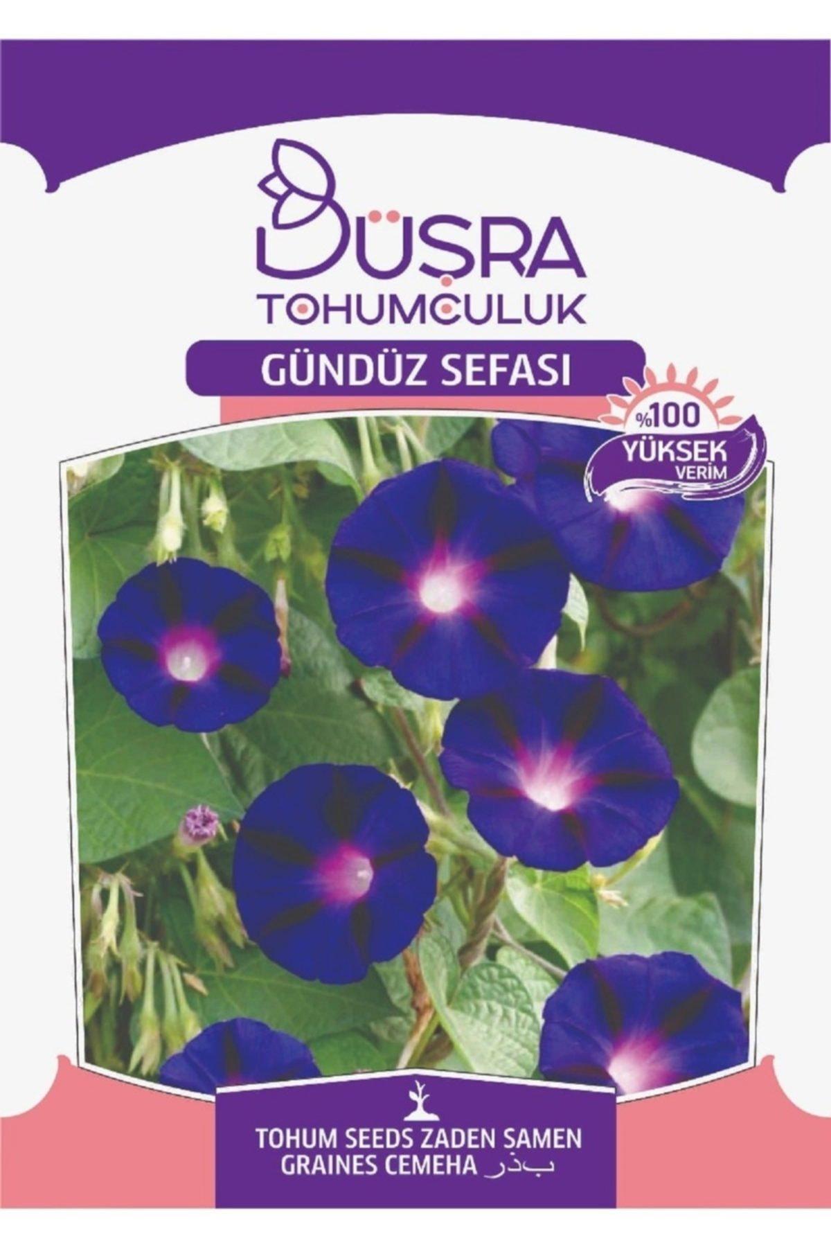 Gündüz Sefası Çiçeği Tohumu Paketi 15 Tohum
