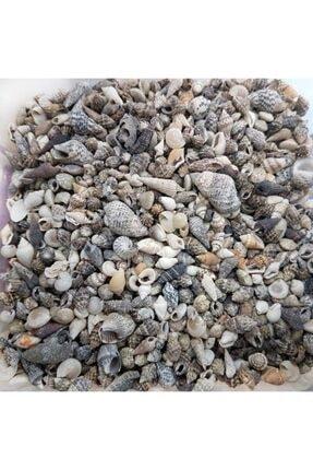 Aker Hediyelik Minik Doğal Deniz Kabuğu 100gr Karışık Ufak Gerçek Deniz Kabukları – Şişe Içine Göre 1