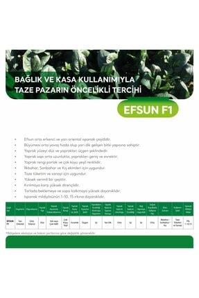 MAY TOHUM May Efsun F1 Ispanak Tohumu 5 Kg 3